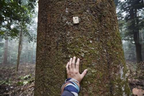 Tagged Tree Photo