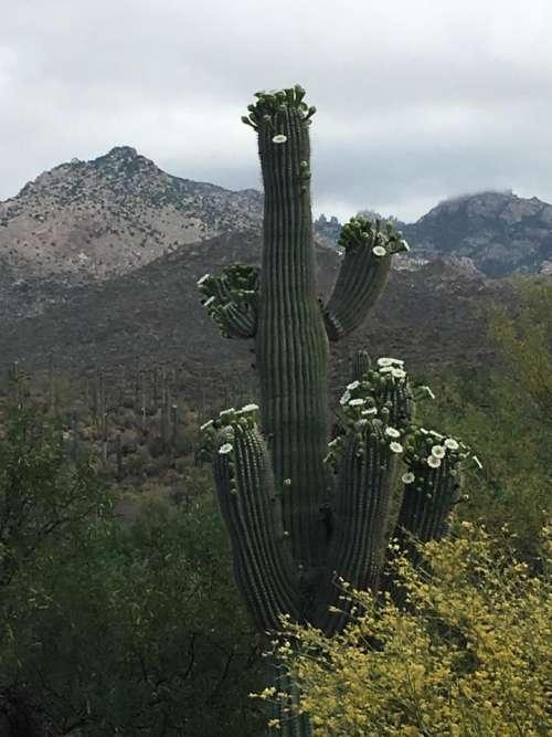 Cactus desert nature