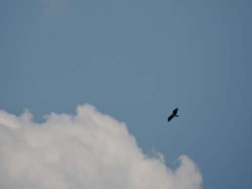 sky clouds weather hawk eagle