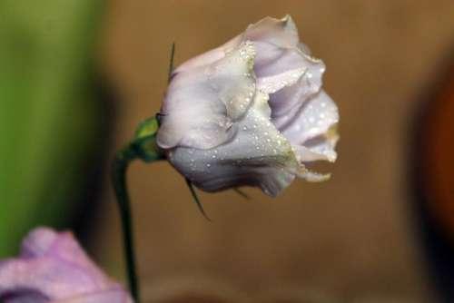 flower flower buds bud buds petals