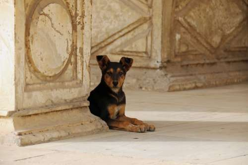 Animal Dogs Summer Egypt Observing Outdoors Hot