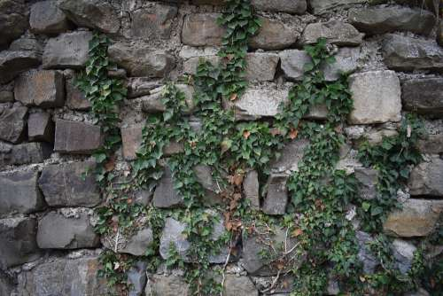 Background Wall Stones Ivy Texture Template Stone