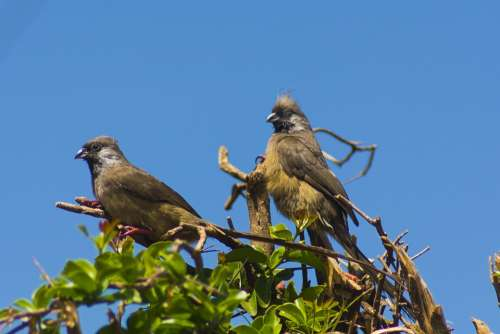 Birds Africa Animal Kenya African Wildlife Safari
