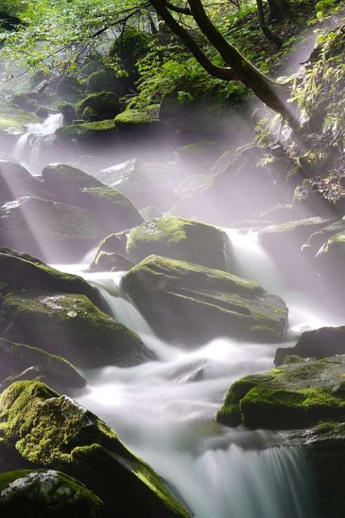 Brook Water Clean Mountain Forest Travel Moss