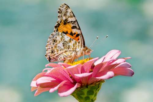 Butterfly Nature Insect Flower Summer Blossom