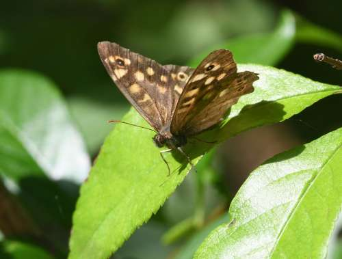 Butterfly Insect Ali Flight Macro Nature Animal