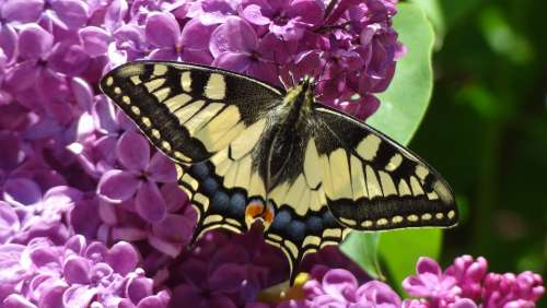 Butterfly Nature Animal Butterflies Insect