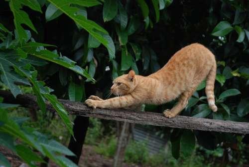 Cat Hairy Animal