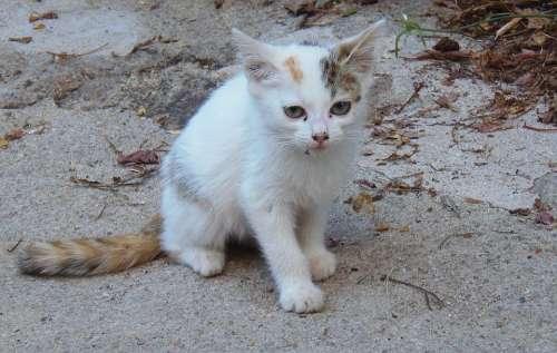 Cat Puppy Kitten Pet Cute Animals Pets Feline