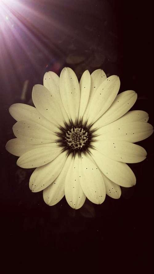 Daisy Spring Summer Garden Filter