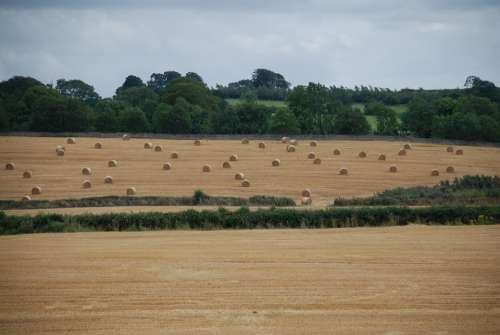Field Bales Straw Summer Time