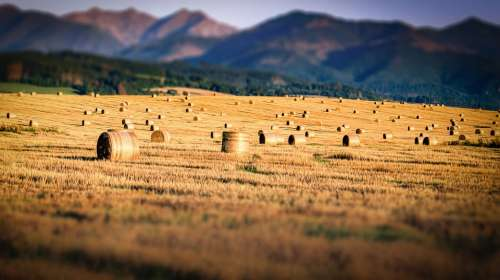 Field Straw Mountains Agriculture Nature