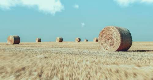 Field Fields Agriculture Straw Yellow Flora Rural