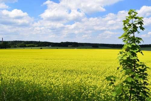 Field Of Rapeseeds Landscape Clouds Summer Nature