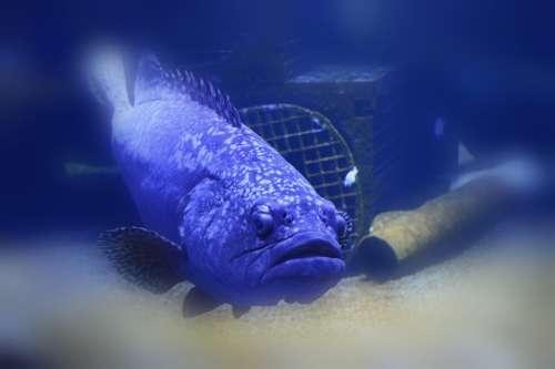 Fish Swim Water Seabed Sea Creature Depths