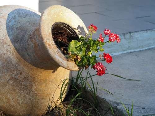 Flower Amphora Greece Garden Design Nature Vase