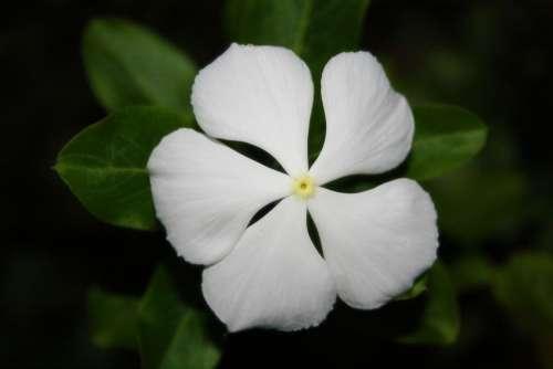 Flower White Green Garden Spring Plant Blossom