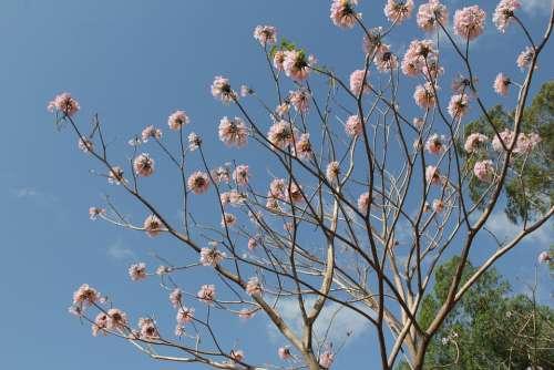 Flower Nature Pink Natural Summer Petals Outdoor