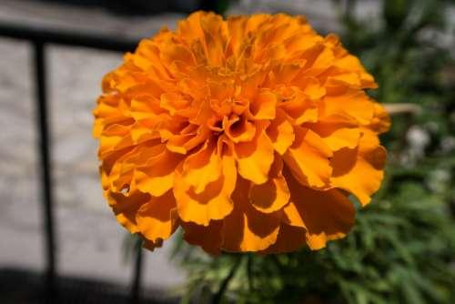 Flower Yellow Summer Nature Garden Flora Floral