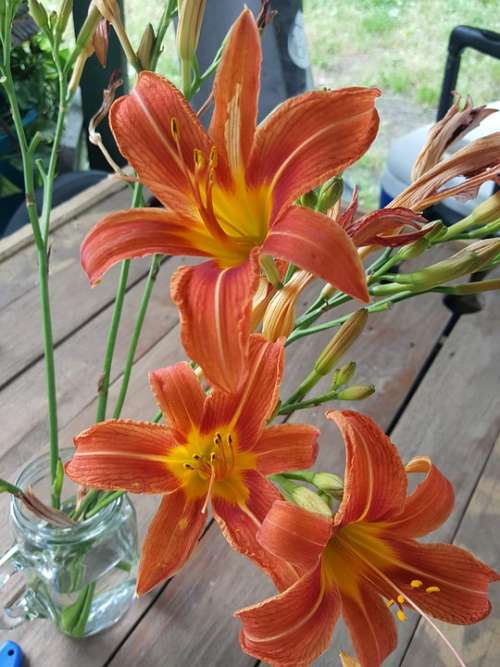 Flowers Lilies Tiger Lily Tiger Lilies Flora Lily
