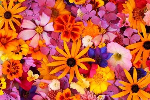 Flowers Summer Summer Flowers Garden Floristry