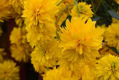 Flowers Yellow Beauty Bright