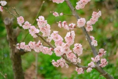 Flowers Landscape Nature Plants Spring