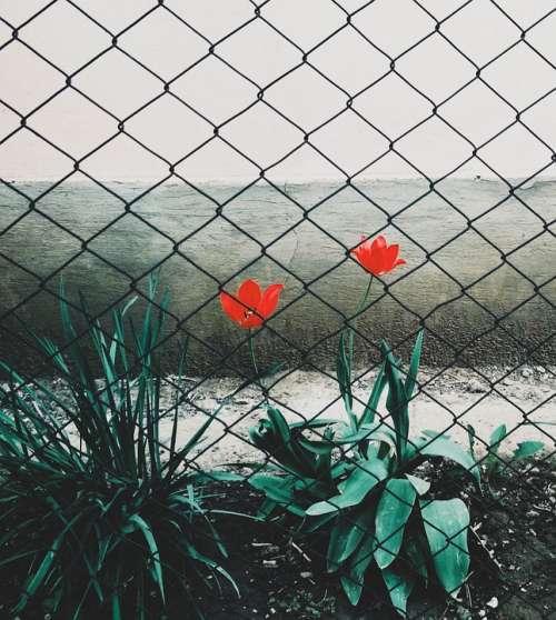 Flowers Fence Spring Nature Flower Flowering