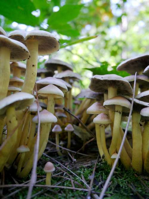 Forest Green Nature Mushroom Season Autumn