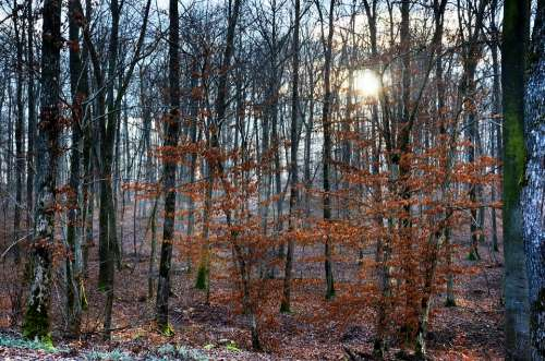 Forest Light Winter Nature Landscape Trees Orange