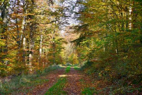 Forest Path Forest Autumn Fall Colors Trees