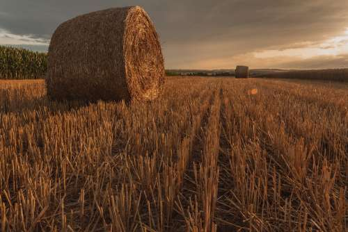 Golden Hour Straw Bales Cereals Agriculture Field