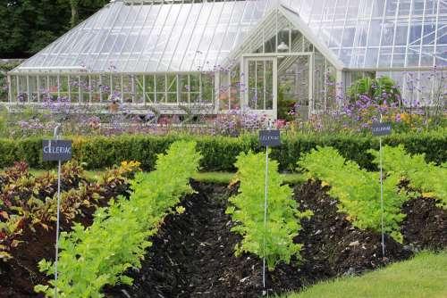 Greenhouse Gardening Plant Growth