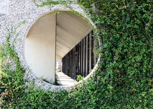 Hole In Wall Vines Office Building Green Vines
