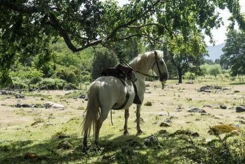 Horse White Horse Riding White Animal Nature