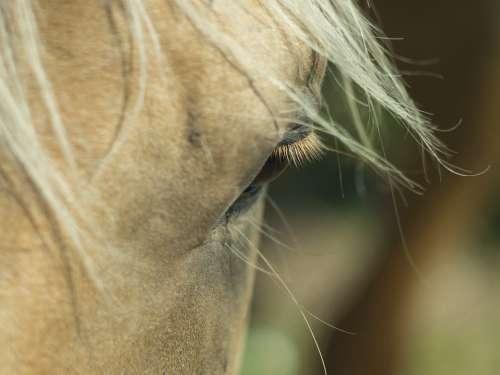 Horse Eye Mane Head Portrait