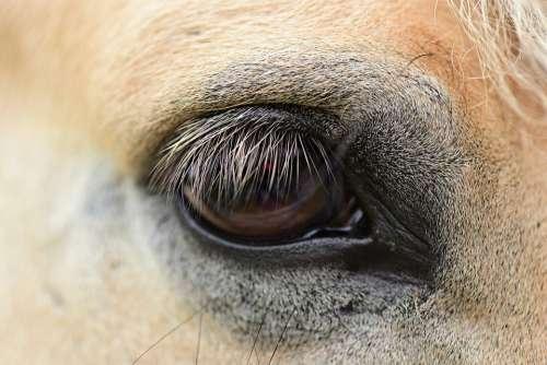 Horse Eye Vision Sight Lashes Animal