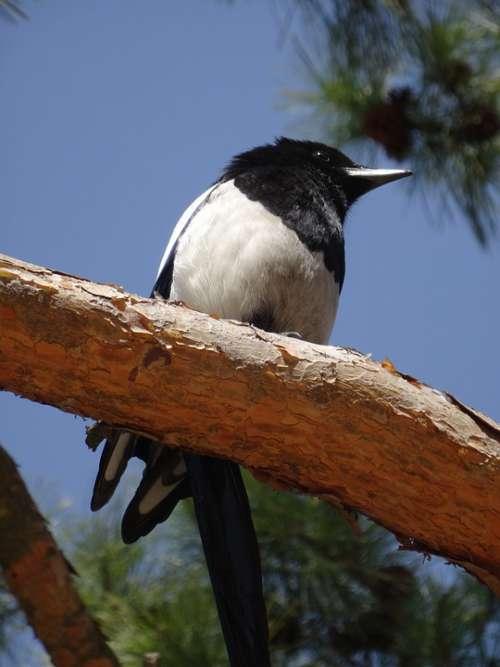 Korea Bird Nature Sky Travel Animal Tree