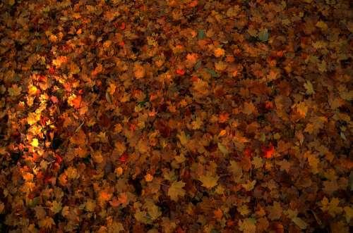 Leaves Autumn Nature Colourful Orange Seasonal