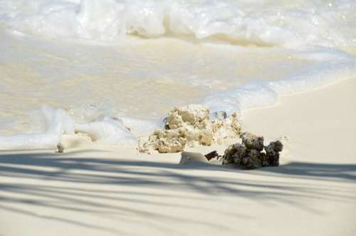 Maldives Beach Coral