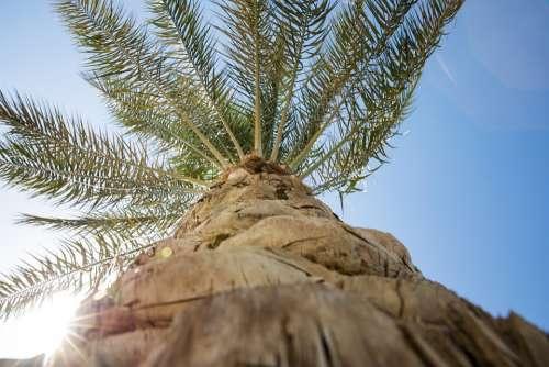 Palm Tree Sky Sun Relax Palm Summer Nature Blue