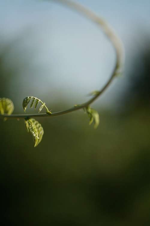 Plant Nature Green Spring Summer Leaves