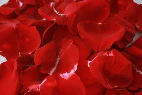 Rose Petals Red Romance