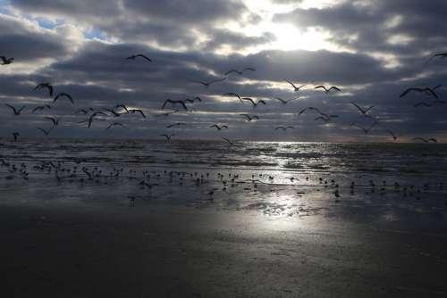 Seagull Sea Beach Sky Cloud Bird Nature Ocean