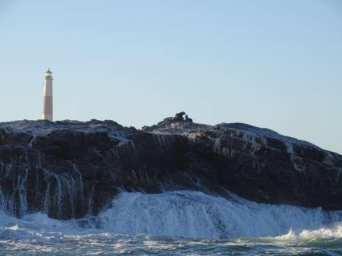 Seals Sea Wave Spray Crawl Namibia Atlantic Rock