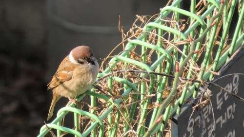 Sparrow New Cute Nature Birds