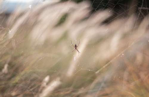 Spider Nature Web Wild