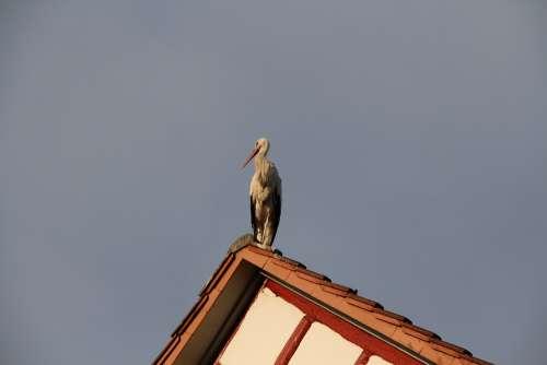 Stork Roof Sky Nature Rattle Stork Animal Plumage