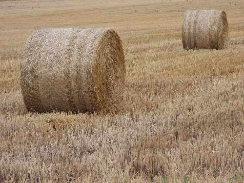 Straw Ballots Harvest Landscape Field Summer