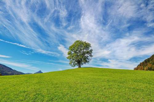 Tree Sky Nature Clouds Landscape Grass